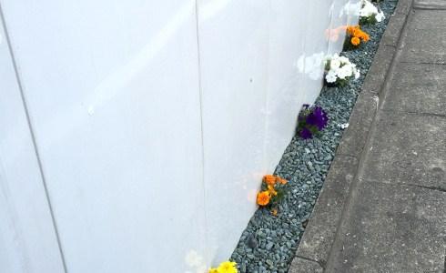 工事現場の仮囲いに咲く花