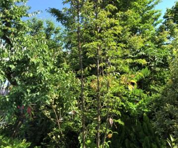 樹木の選定と外構工事の打合せ | ゆめみ野の家