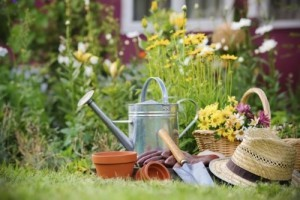why-you-need-your-garden-now