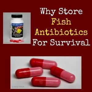 why-store-fish-antibiotics-for-survival