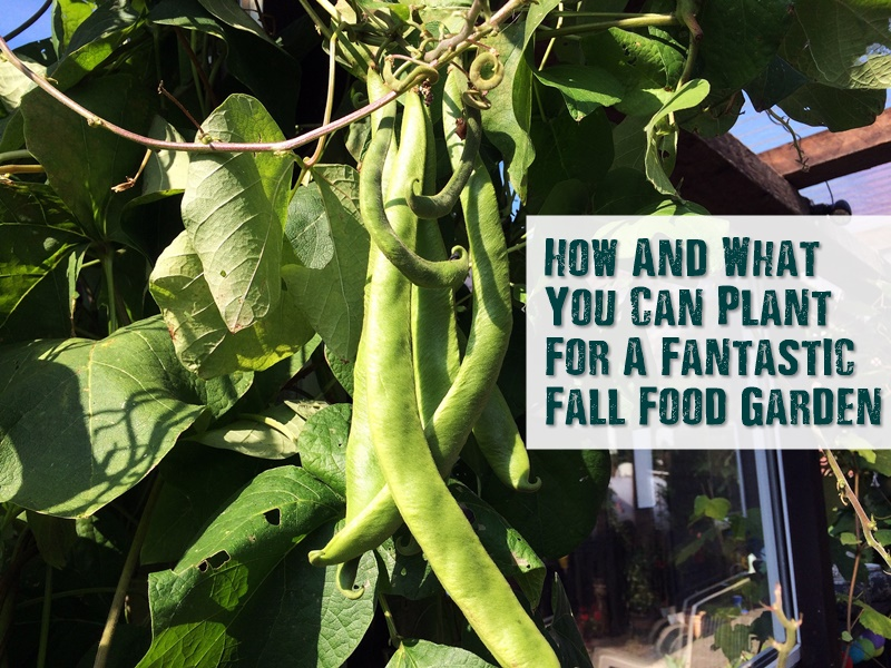 How And What You Can Plant For A Fantastic Fall Food