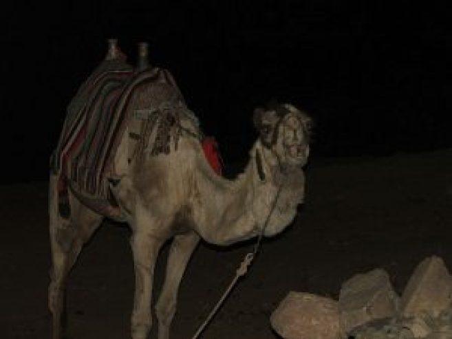 ▲夜間的西奈山伸手不見五指,撞見半路出現的駱駝差點中風