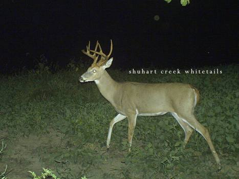 Register Now for Fall 2015 Whitetail Hunts