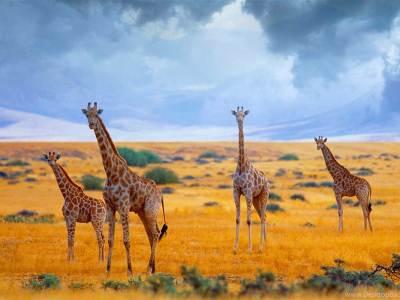 Nairobi Package Trip