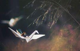 fiddle-oak-photography-1