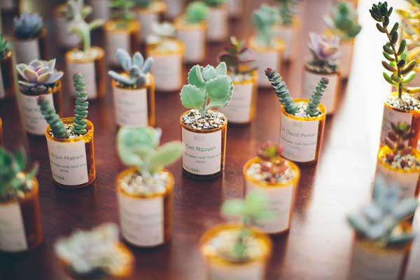 Mini Succulent Plants Bulk
