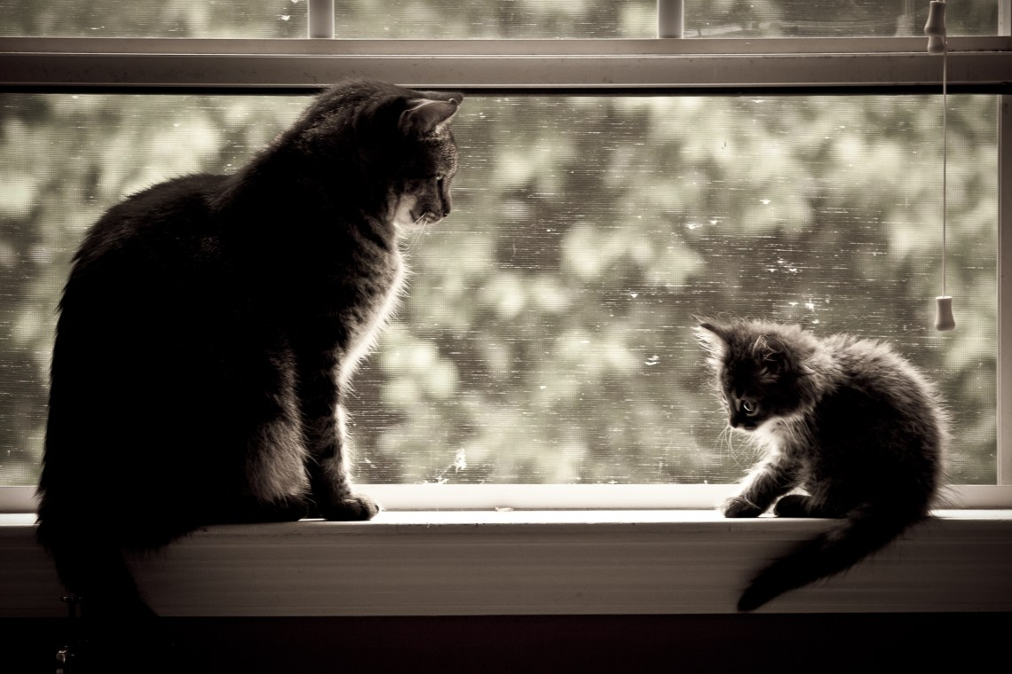 Cat and Kitten Sitting on a  Window Ledge