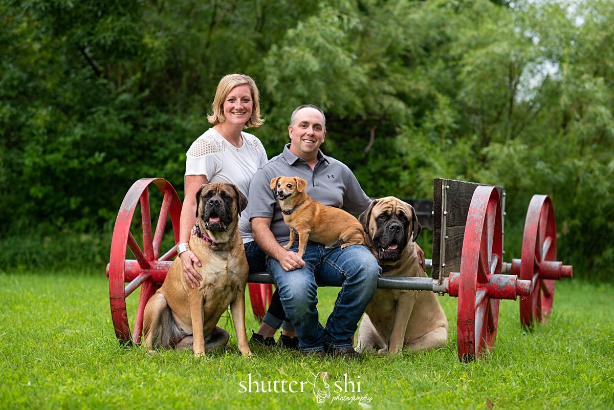 mastiff dogs, dachshund, rapid city family photographer, multiple dog family photos