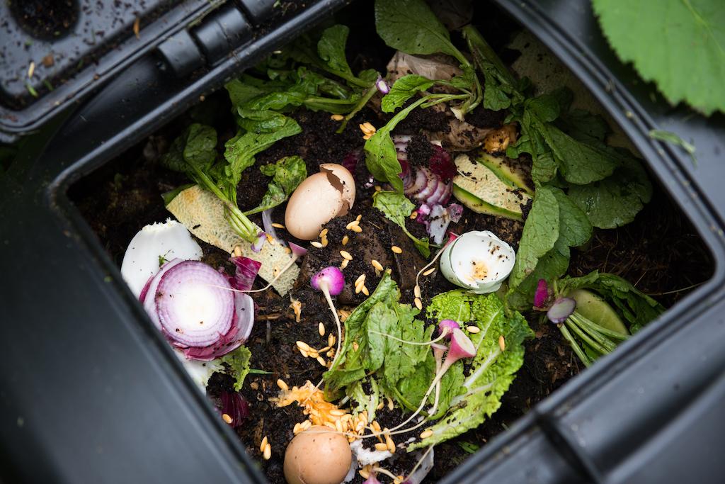 Reducing Food Waste in Homes