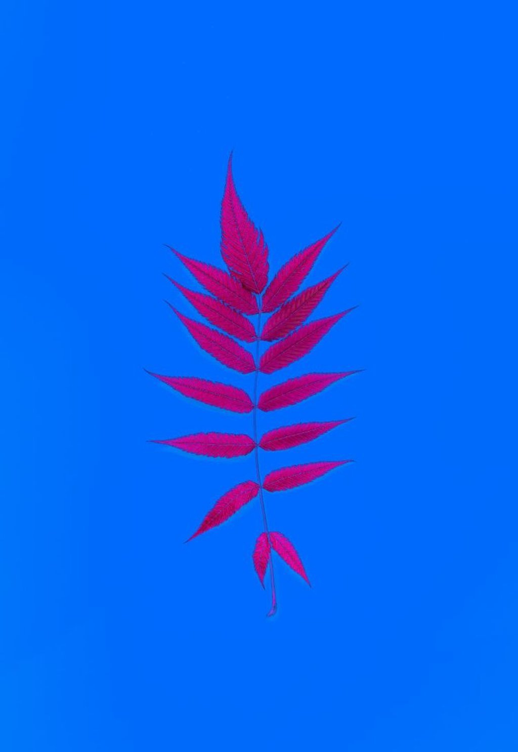 Framed Fern Leaf