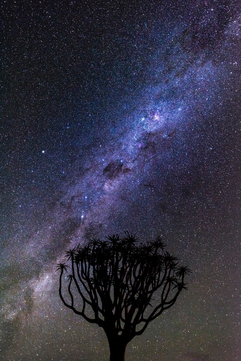 Quiver Tree (South Africa)