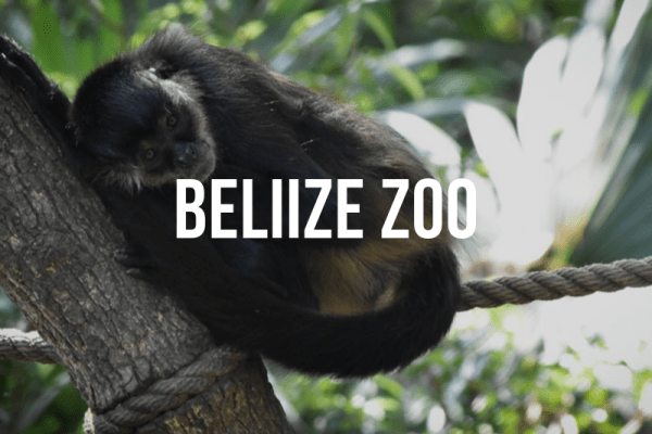 Belize Zoo Private Tour