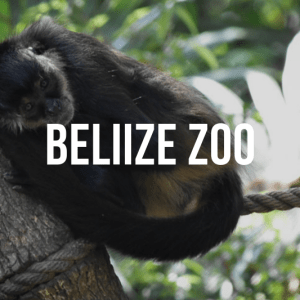 Belize Zoo Private Tour
