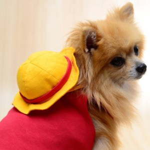 Luffy Dog Outfit One Piece Cosplay Shut Up And Take My Yen : Anime & Gaming Merchandise
