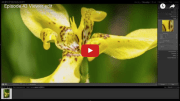 Viewer edit how to edit a flower using Lightroom