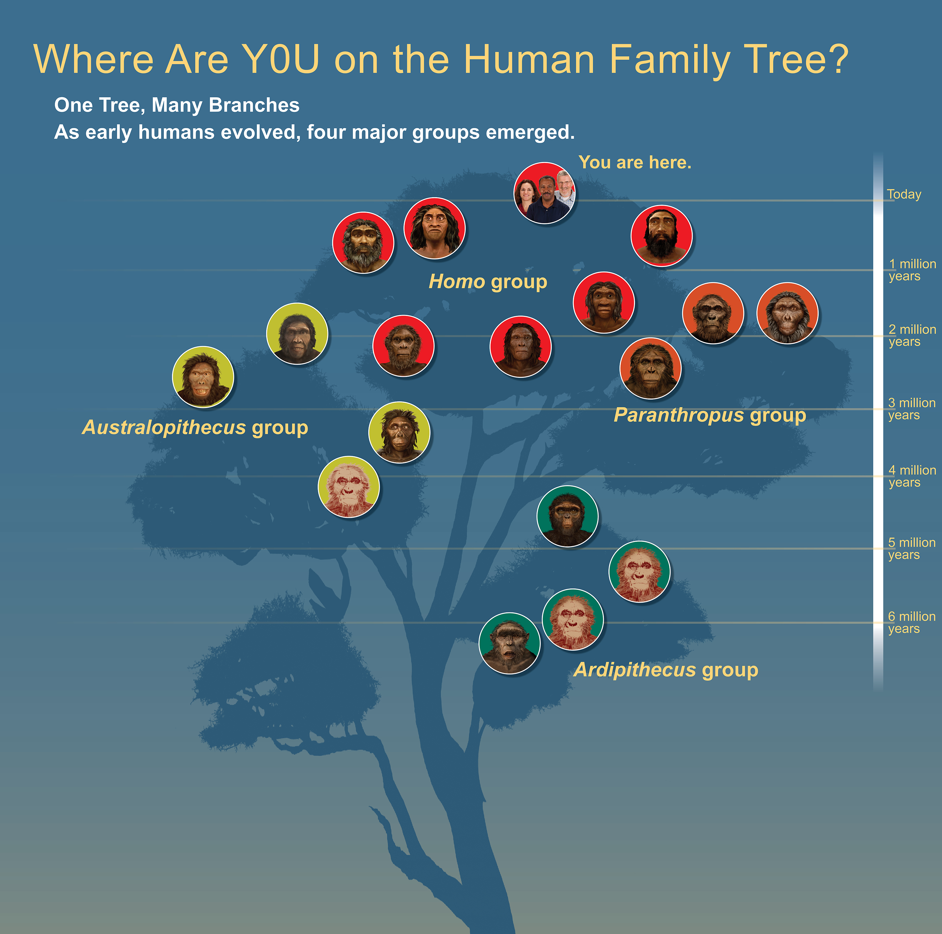 Human Origins Traveling Exhibition Family Tree