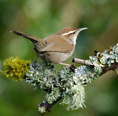 Image result for wren nest