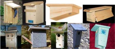 Bluebird Nestbox Styles  Pros and Cons nestbox styles