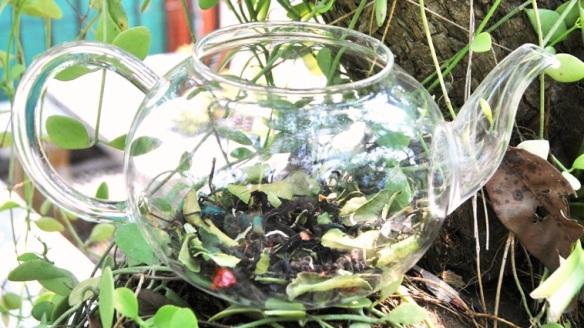 Siam Blend Black: aromatic flavored thai black tea blend behind glass in my garden