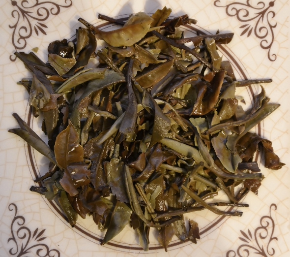Ancient Tree White Moonlight White Tea from Yunnan's ancient tea trees - wet tea leaves after infusion