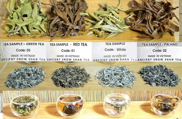 4 Snow Shan teas from ancient Vietnam tea trees - dry and wet leaves