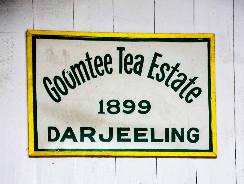 Goomtee Tea Estate, Kursesong Valley, Darjeeling, India