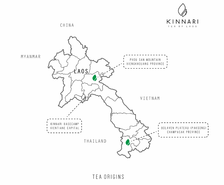 Map of Kinnari tea tree areas in Xiengkhouang and Bolaven Plateau in Laos