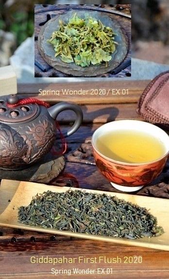 Giddapahar First Flush 2019 Spring Wonder EX 01 - first spring picking 2020 of Giddapahar tea garden in Darjeeling