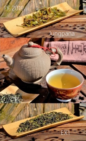 Jungpana First Flush 2019 Spring Wonder EX1 - very first spring picking 2019 of Jungpana Darjeeling tea garden