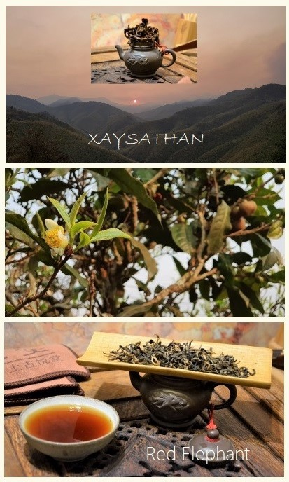 """Xaysathan Red Elephant Black Tea - """"red"""" tea from semi-wild growing, up to 300 years old tea trees in Xaysathan district, Xayabouri province, western Laos"""