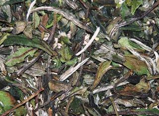 Pai Mu Tan white tea from Fuding, Fujian province, China: buds & leaves closeup