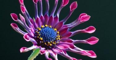 La vita segreta delle piante libro, la vita segreta delle piante pdf, la vita segreta delle piante il saggiatore