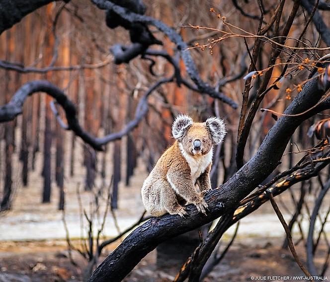 Diritti degli animali: il deserto delle tutele