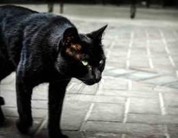 A je supersticioz?? Shiko cfare thone per macen e zeze, pasqyren e thyer etj.. patkua kali gjeth arre ne kulete
