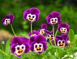 Ragip Dragusha - Fol pranverë me gojen tande! (Poezi)