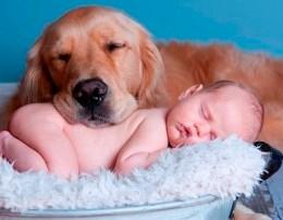 Keni vendosur te blini nje qen per vogelushin tuaj Ja si mund te zgjidhni qenin perfekt per te.