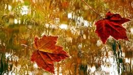Shirat e vjeshtes - Albert Habazaj (Poezi) Poezi shqip