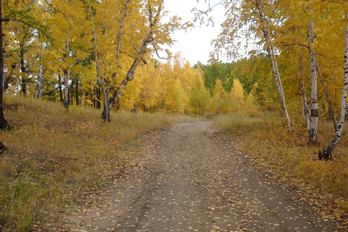 Chita road with fall colors