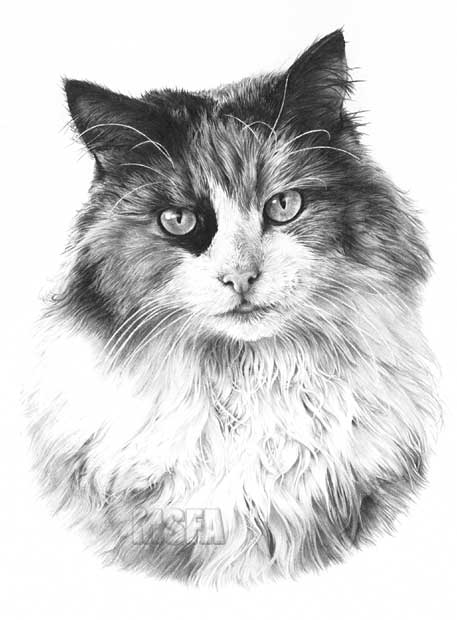 TORTOISESHELL CAT Fine Art Print By Mike Sibley