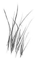 desenhando grama e capim desenho negativo a expressÃo da arte