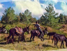 Donkey on Etna