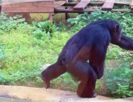 zoo in sicilia