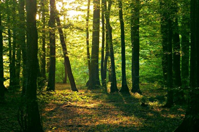 """Sant'Alfio, col """"riordino forestale"""" basta al precariato"""
