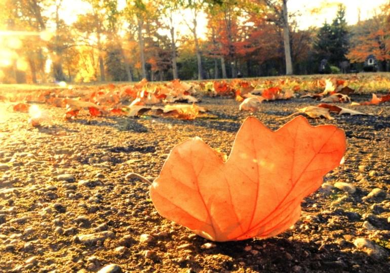 L'autunno ci intossica? L'ortica in nostro aiuto per pelle e capelli sani