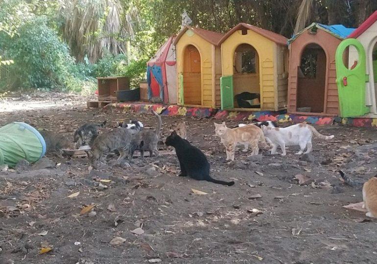 I gatti di Villa Curia vincono al Tar