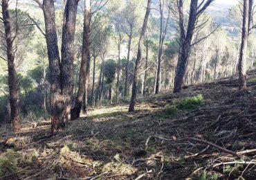 Nicolosi, ecatombe ecologica ai Monti Rossi
