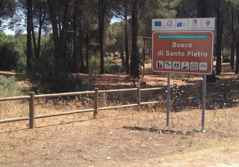 Nel bosco di Santo Pietro, la I Festa regionale  della Macchia mediterranea