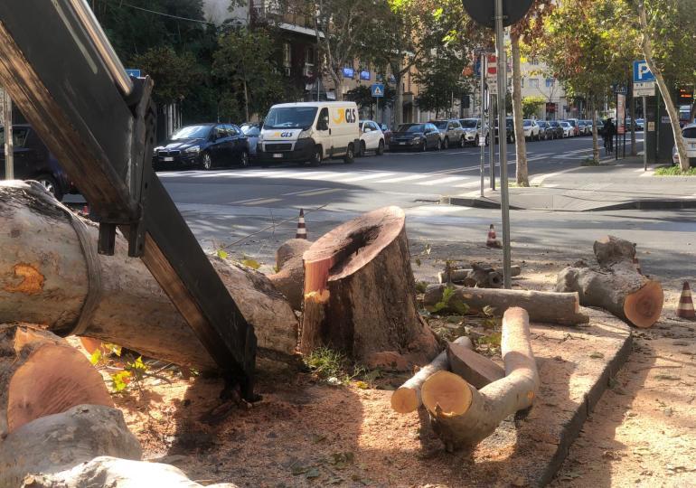 A Catania si taglia il poco verde esistente