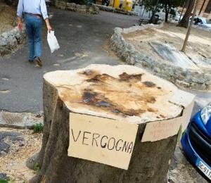 Catania, la strage degli alberi