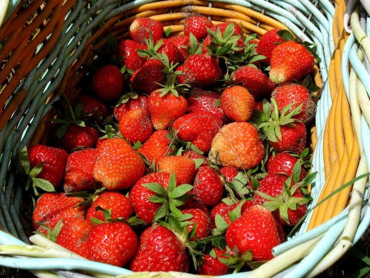 It's time for strawberries: beneficial properties calories and recipes of 17 easy desserts